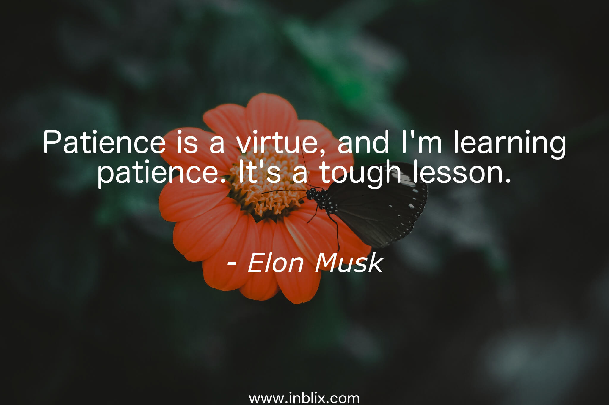 Elon Musk's Quote by nell-fallcard ...